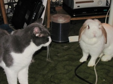 Adopt-a-bunny_Hugo-and-Spazzy