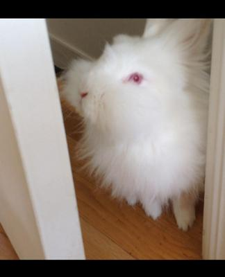 My bunny looks out her room door