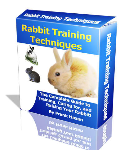 Rabbit Training Techniques