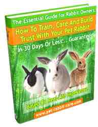 How to Train, Care and Build Trust with Your Pet Rabbit