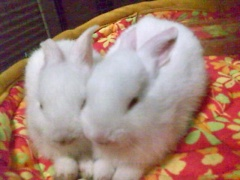 rabbits-photos_chloechinney