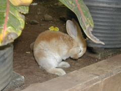 rabbits-photos_clean-my-leg1