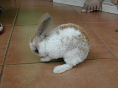 rabbits-photos_clean-my-leg2
