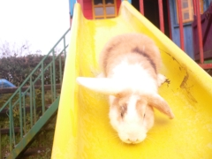 rabbits-photos_i-love-this-slide