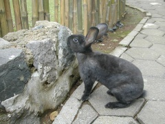 rabbits-photos_something-up-there