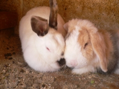 rabbits-photos_warm