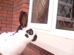 rabbits-photos_window