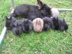 rabbits-photos_yay-cheese