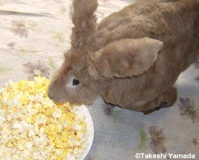 Seara (sea rabbit) munches popcorns (September 24, 2010)