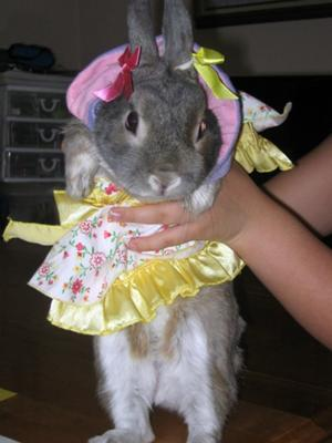 Happy Easter from Mr Nibbles !