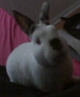 Laser the Bunny