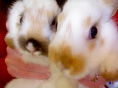The one on the left is my rabbit and the right one is my little brothers