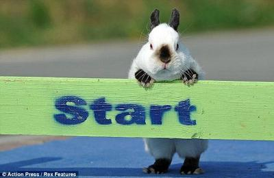 let's start to develop Bond with your Rabbit