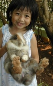 rabbits-as-pets_my daughter with her brown rabbit