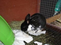 rabbits-photos_oreo